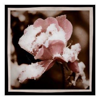 Vintage Rose Photography Poster