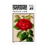 Vintage Rose Postage Stamp