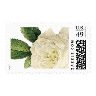 Vintage Rose Stamp