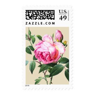 Vintage Roses Botanical Print Stamps