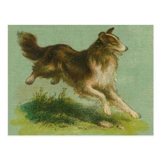 Vintage Running Collie Postcard