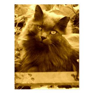 Vintage Russian Blue Cat Postcard