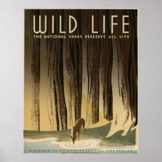 Vintage salvaje de la vida National Park Service 1 Poster