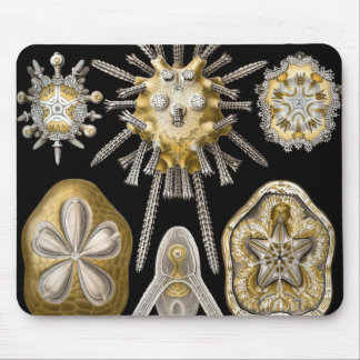 Vintage Sand Dollars Sea Urchins by Ernst Haeckel Mouse Pad