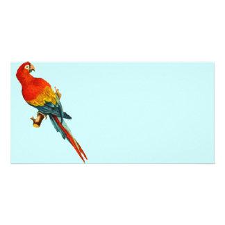 Vintage *Scarlet Macaw* Parrot Desing Card