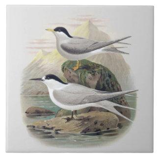 Vintage Science NZ Birds - Black-Fronted Tern Ceramic Tile