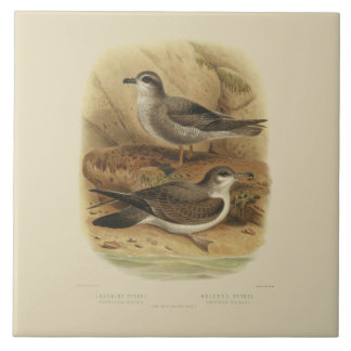 Vintage Science NZ Birds - Laughing Petrels Tile