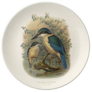 Vintage Science NZ Birds - NZ Kingfisher Porcelain Plate