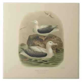 Vintage Science NZ Birds - Wandering Albatrosses Ceramic Tile