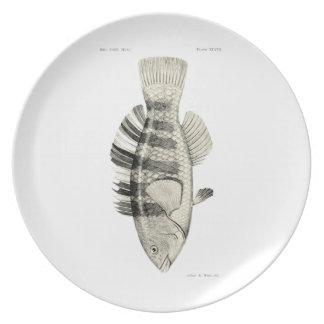 Vintage Science NZ Fish - Banded Parrot Fish Melamine Plate