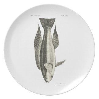 Vintage Science NZ Fish - Greenbone Plate