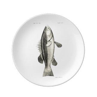 Vintage Science NZ Fish - Hapuku Plate