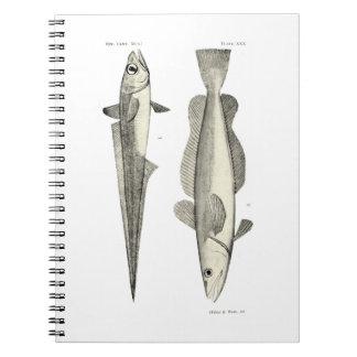 Vintage Science NZ Fish - Hoki Notebook