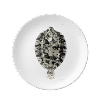 Vintage Science NZ Fish - Lemon Sole Porcelain Plate