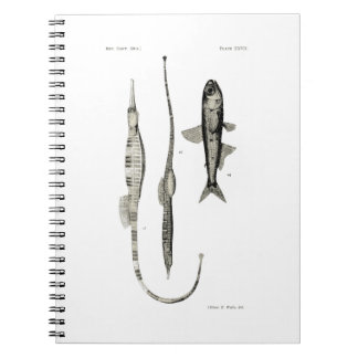Vintage Science NZ Fish - Pipe and Lantern Fish Notebook