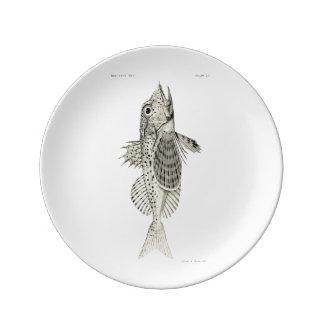 Vintage Science NZ Fish - Spotted Gurnard Porcelain Plate