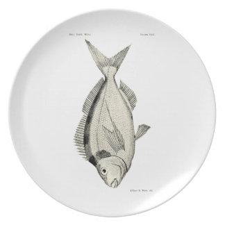 Vintage Science NZ Fish - Tarakihi Plate