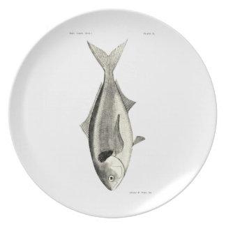 Vintage Science NZ Fish - Warehou Melamine Plate