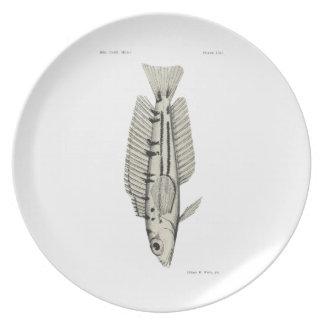 Vintage Science NZ Fish - Yellow Weaver Dinner Plate