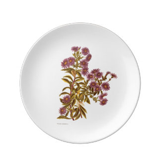 Vintage Science NZ Flowers - Olearia semidentata Porcelain Plate