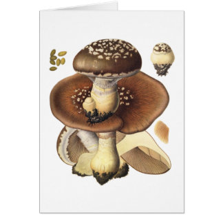 Vintage Scientific Mushroom Mushrooms illustration Card