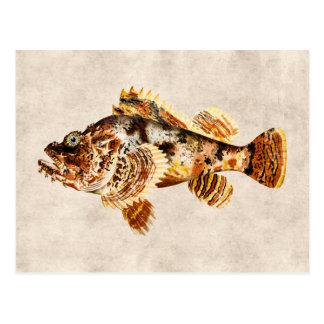 Vintage Scorpion Fish Antique Hawaiian Drawing Postcard