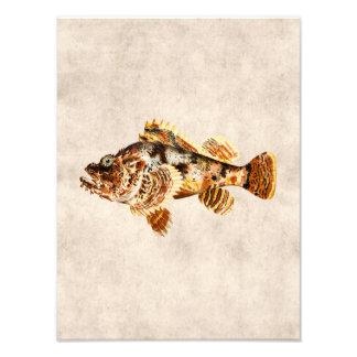 Vintage Scorpion Fish - Antique Hawaiian Print Photo Print
