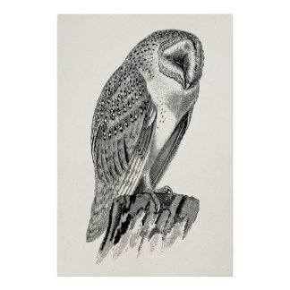 Vintage Screech Owl Bird Illustration Template Poster