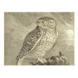 Vintage Screech Owl Postcard