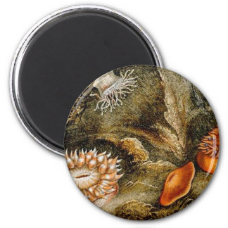 Vintage Sea Anemones 2 Inch Round Magnet