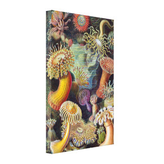 Vintage Sea Anemones by Ernst Haeckel Stretched Canvas Print