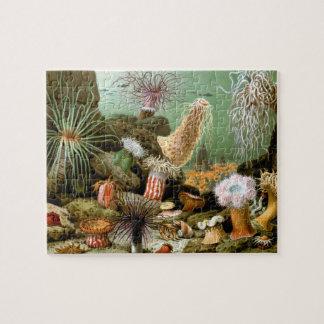 Vintage Sea Anemones by Merculiano Jigsaw Puzzle