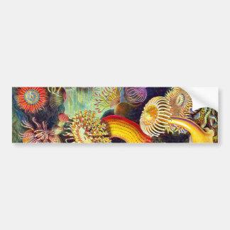 Vintage Sea Anemones, Ernst Haeckel Bumper Sticker