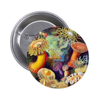 Vintage Sea Anemones, Ernst Haeckel Pinback Buttons