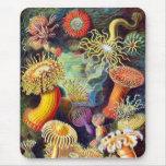 Vintage Sea Anemones, Ernst Haeckel Mouse Pad