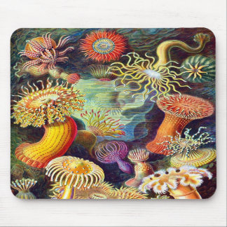 Vintage Sea Anemones, Ernst Haeckel Mouse Pads