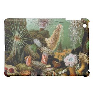 Vintage Sea Anemones Fine Art iPad Case
