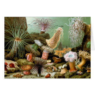 Vintage Sea Anemones, Marine Life Animals Card