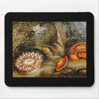 Vintage Sea Anemones Mouse Pad