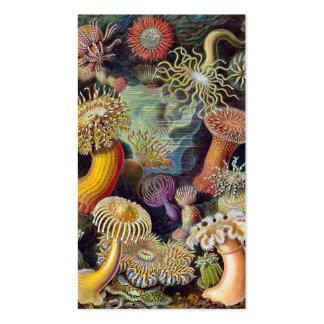 Vintage sea anemones scientific illustration business card