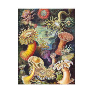 Vintage sea anemones scientific illustration canvas print
