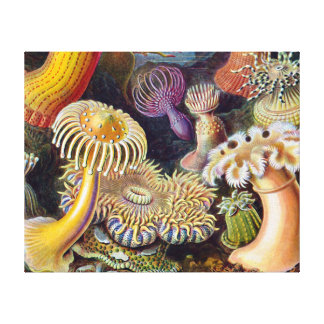 Vintage sea anemones scientific illustration stretched canvas print