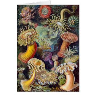 Vintage sea anemones scientific illustration card