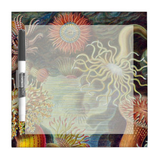 Vintage sea anemones scientific illustration Dry-Erase board