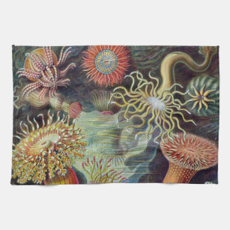 Vintage sea anemones scientific illustration kitchen towel