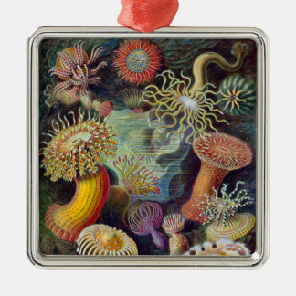 Vintage sea anemones scientific illustration metal ornament