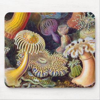 Vintage sea anemones scientific illustration mouse pad