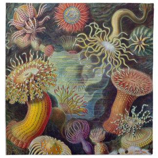 Vintage sea anemones scientific illustration napkin
