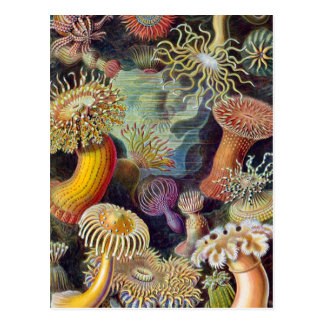 Vintage sea anemones scientific illustration postcard