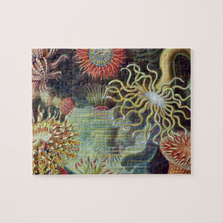 Vintage sea anemones scientific illustration jigsaw puzzle